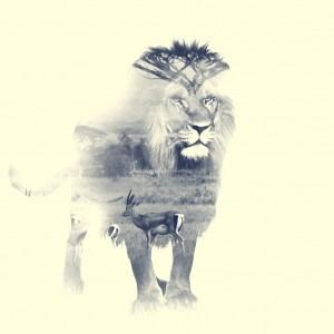 Lion, double exposition 01. Crédit Photo Alexandre De Vries, La retouche photo
