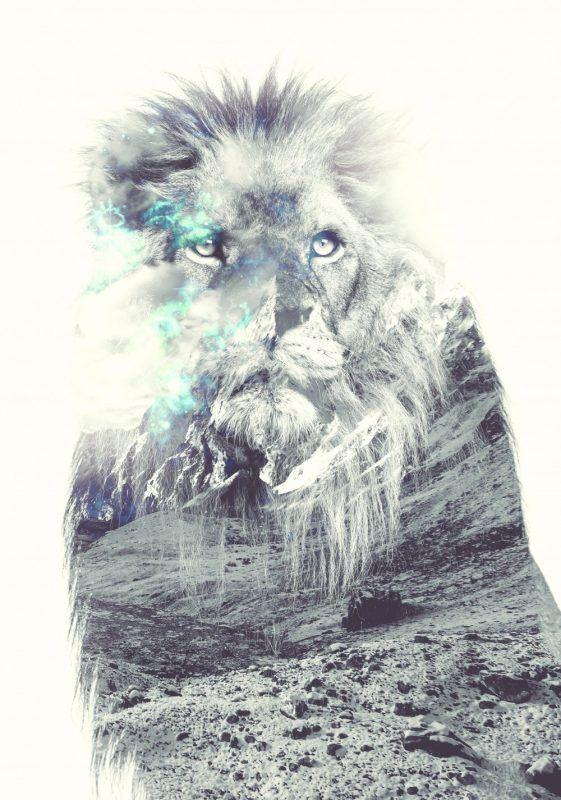 Lion, double exposition Nature. Crédit Photo Alexandre De Vries, La retouche photo