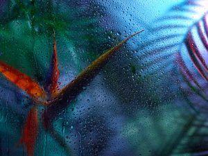 Rain Forest par Julien Palast, sur le blog La Retouche photo.