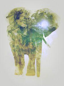 Elephant, Smoky nature I