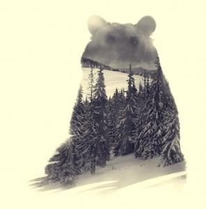 Bear, double exposition Nature. Crédit Photo Alexandre De Vries, La retouche photo